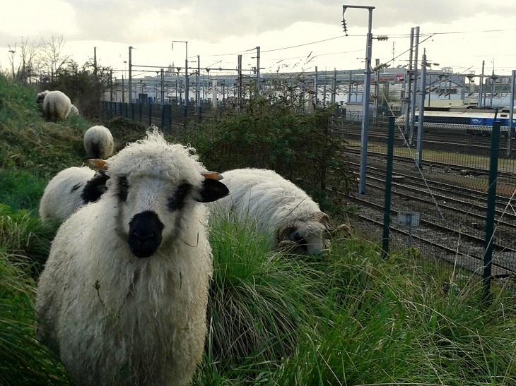 https://backend.streetpress.com/sites/default/files/moutons-93-clinamen-1.jpg