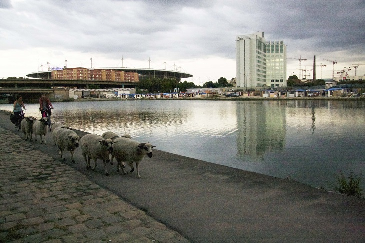https://backend.streetpress.com/sites/default/files/moutons-stade-de-france.jpg